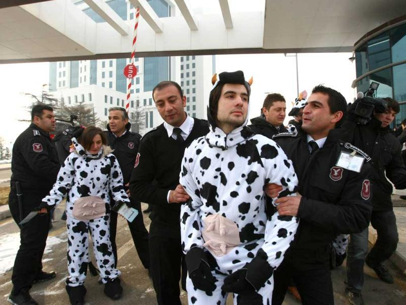 A Greenpeace activist wearing a cow costume displays a banner which translates as 'don't eat genetically modified food' during a demonstration outside the ministry of agriculture in Ankara. AFP Photo/Adem Altan