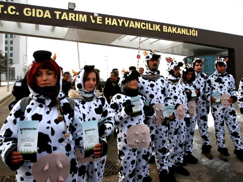 Greenpeace activists display leaflets which translates as 'don't eat genetically modified food' as they wear cow costumes during a demonstration outside the ministry of agriculture in Ankara. AFP Photo/Adem Altan