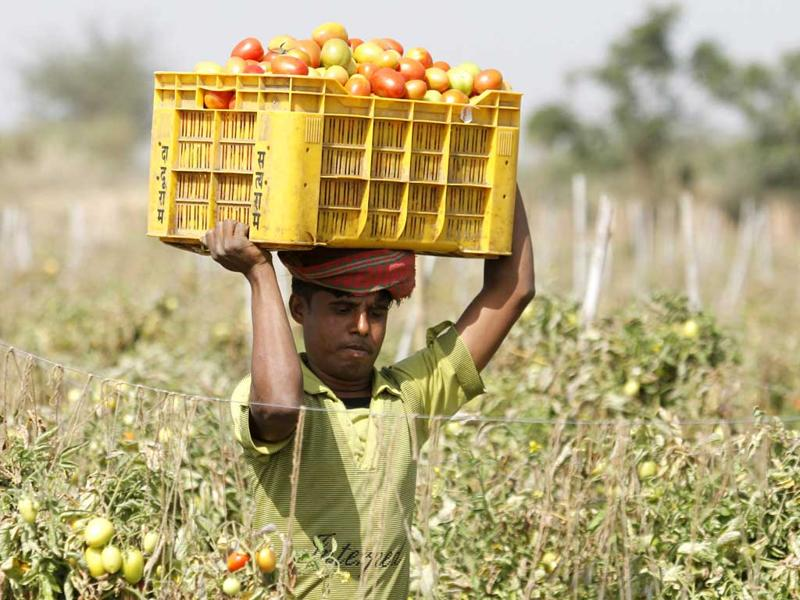 The budget is expected to give a thrust to micro irrigation, come up with initiatives to promote foreign investment in cold chains and regularly monitor its agricultural policy. (Reuters)