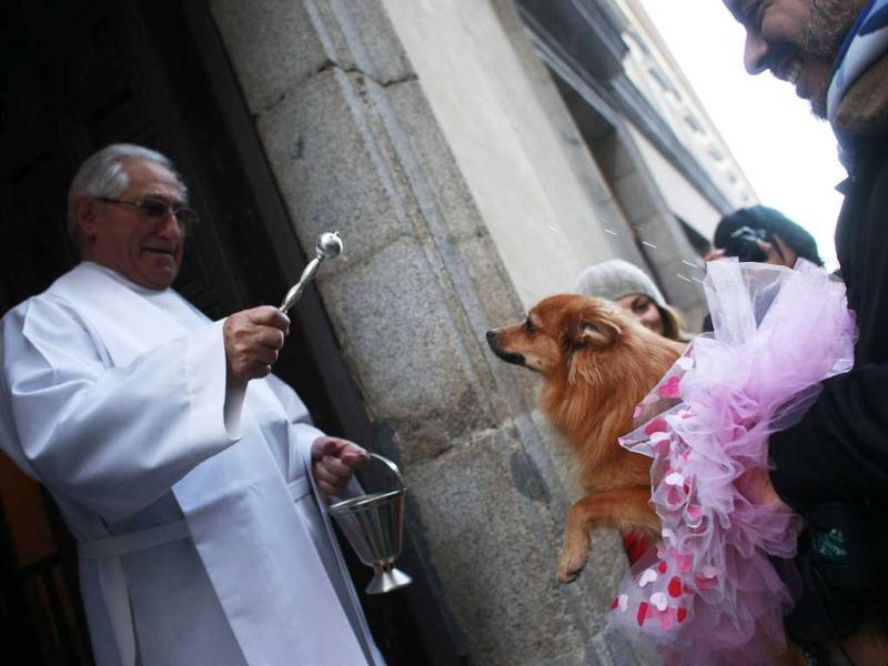 A priest blesses a dog in a ballet tutu outside Madrid's San Anton Church. Hundreds of pet owners bring their animals to be blessed every year on the day of San Anton, Spain's patron saint of animals. REUTERS/Susana Vera