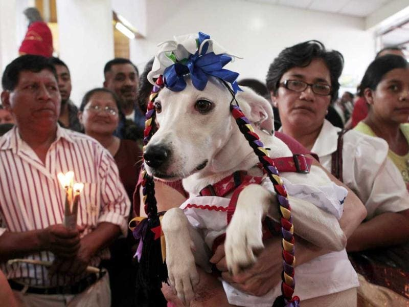 A parishioner holds up her dog during a mass in honour of Saint Lazaro in the indigenous community at Masaya city, about 15 miles (24 km) south from Managua. Hundreds of devotees presented their sick animals to the Saint Lazaro, considered the saint patron of dogs. REUTERS/ Oswaldo Rivas
