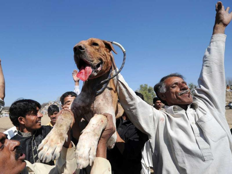 Farmers celebrate with their winner dog during a dog fighting match in Tangdhe Sayedan, a village in the breadbasket province of Punjab, 110 km east of Islamabad. AFP/Aamir Qureshi