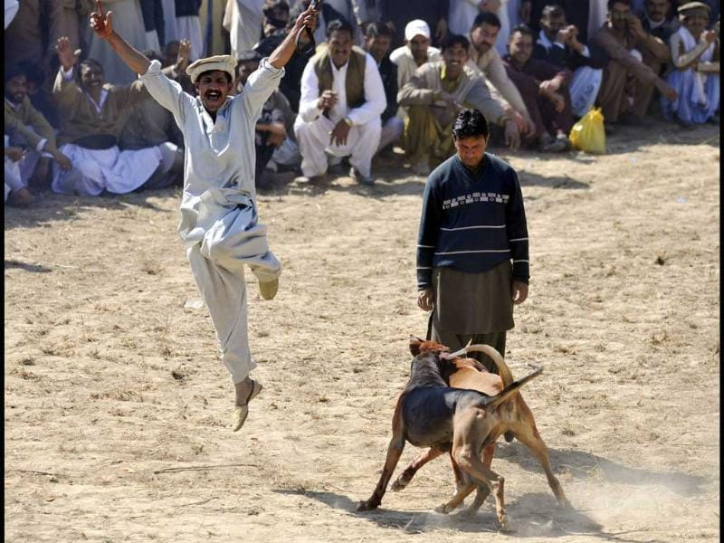 A man celebrates after his dog wins a fight during a dog-fighting match in Tangdhe Sayedan, 110 kilometres east of Islamabad. AFP/Aamir Qureshi