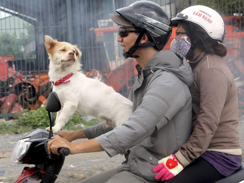 A dog rides on motor scooter with family in Ho Chi Minh City, Vietnam. AP Photo/Nick Ut