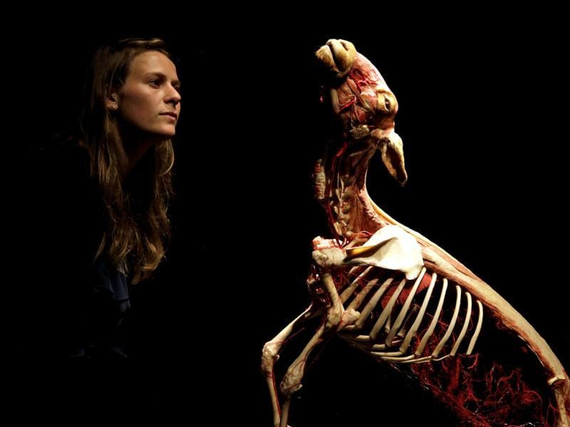 An employee poses next to a plastinated sheep during the media viewing for the exhibition