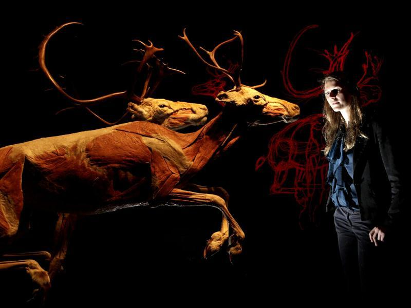 An employee poses next to plastinated reindeers during the media viewing for the exhibition