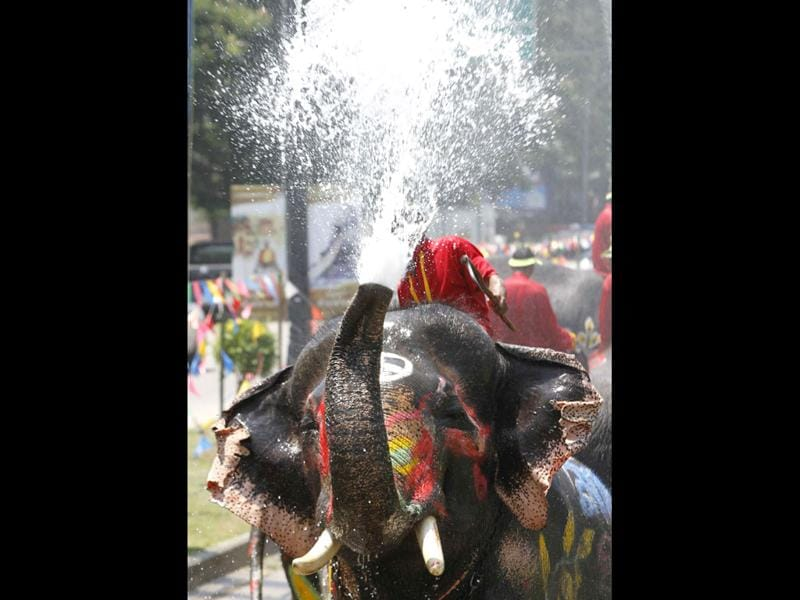 An elephant sprays tourists with water during the Songkran water festival in Thailand's Ayutthaya province, about 80 km (50 miles) north of Bangkok. Songkran, the most celebrated festival of the year, marks the start of Thailand's traditional New Year. Reuters/Chaiwat Subprasom