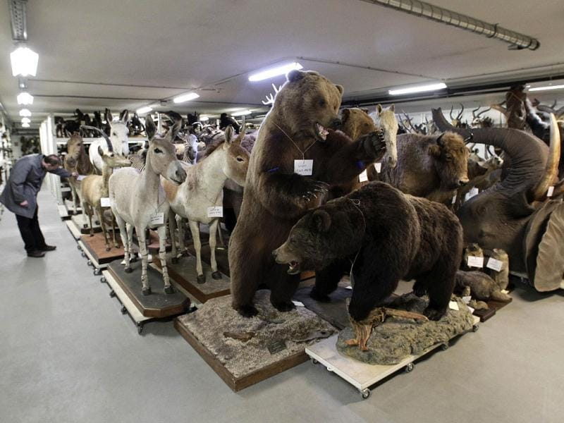 Mounted animals are stored in the attic of the Naturhistorisches Museum Wien (Museum of Natural History) in central Vienna. Reuters Photo/Herwig Prammer