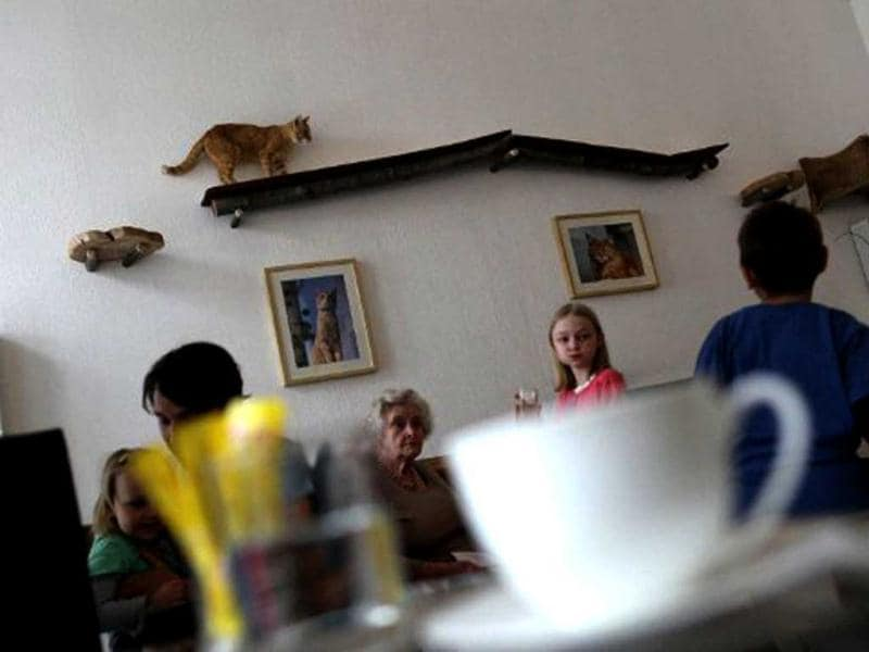 A cat walks along a shelf as customers look at him at the Cafe Neko, in the city center of Vienna. Neko, which means cat in the Japanese language, is the first