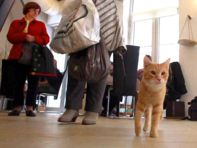 Two cats 'Thomas' and 'Sonja' stroll around as customers arrive in Vienna's first cat cafe. After three years of negotiations with city officials over hygiene issues, Austria opened its first cat cafe last Friday. 'Cafe Neko',