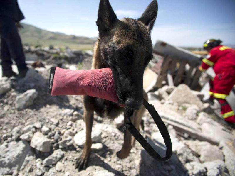 A canine member of the Hermosillo Task Force, a K-9 search and rescue unit from Mexico, plays with a toy after finding a mock buried victim while training to search for earthquake victims in a simulated rubble pile in Salt Lake City, Utah. Reuters/Jim Urquhart