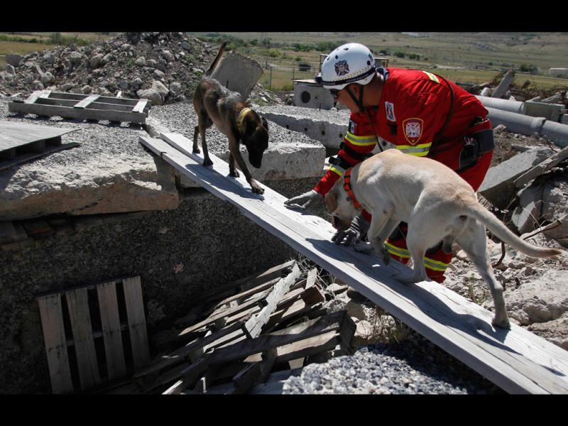 Pedro Paz, a member of the Hermosillo Task Force, a K-9 search and rescue unit from Mexico, trains dogs to cross planks in a simulated rubble pile during a training session with Utah Task Force 1 on searching for earthquake victims, in Salt Lake City, Utah. The team from Mexico is one of four newly formed teams in the country that specializes in the search and recovery of people in collapsed structures. The team is training in Utah for a week after spending a week working with teams in California and will move on to Colorado next.  REUTERS/Jim Urquhart
