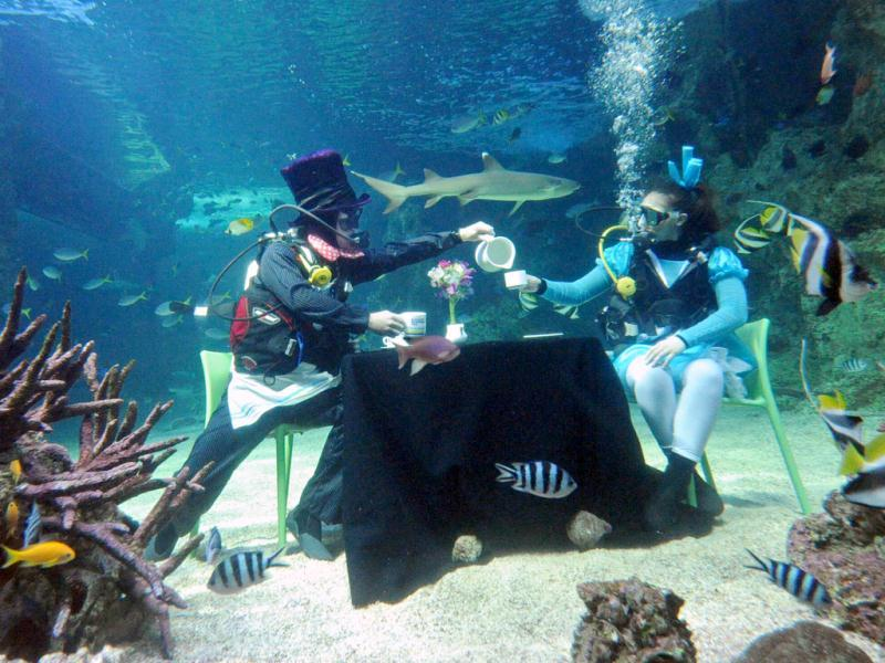 Scuba divers Martin Garwood (L) and Amanda Elzer (R), dressed as characters from the Mad Hatter's Tea Party, sit in a display at the Sydney Aquarium to help raise money for the Cancer Council. AFP/Torsten Blackwood