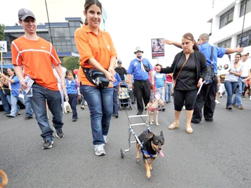 A woman and her disabled dog with its cart take part in a protest against animal abuse in San Jose, Costa Rica. AFP Photo/Rodrigo Arangua
