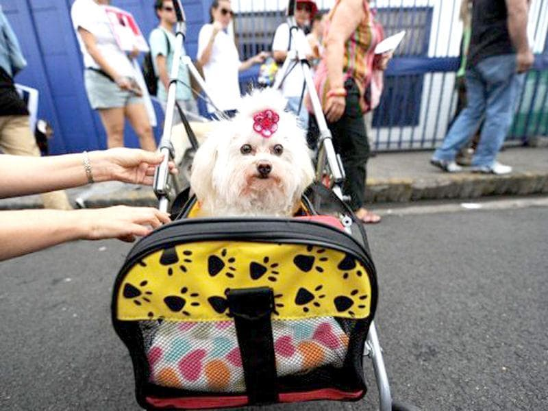 A dog is seen during a protest against animal abuse in San Jose, Costa Rica. AFP Photo/Rodrigo Arangua
