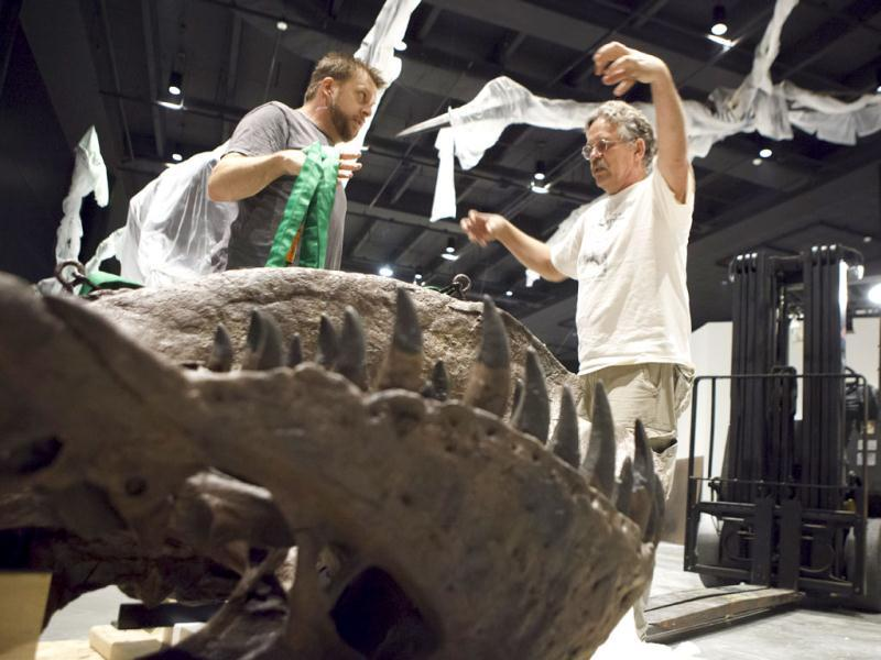 Director Pete Larson of the Black Hills Institute of Geologic Research, right, discusses with artist Tomas Schneider how he will use a forklift to hoist a Tyrannosaurus Rex fossil skeleton into place in the new Hall of Paleontology at the Houston Museum of Natural Science. The $85 million wing of the museum that opens June 2 will have the only Triceratops skin found to date and a unique Tyrannosaurus Rex fossil with complete hands. AP/Michael Stravato