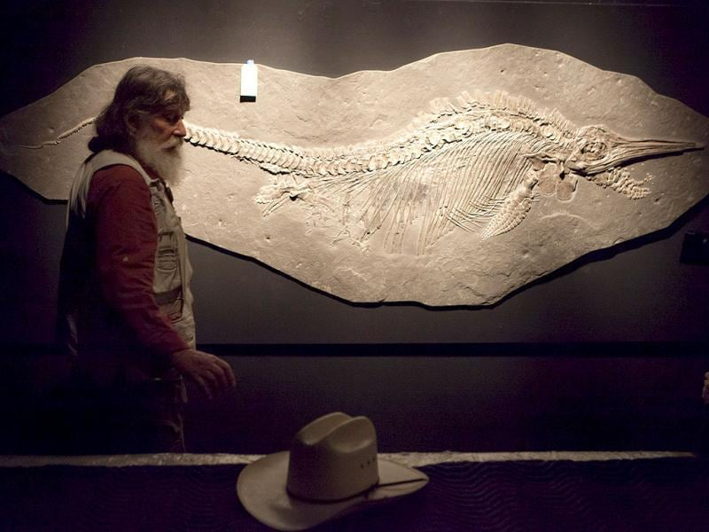 Robert Bakker, curator of paleontology, shows a fossil of a Ichthyosaur and unborn pups that will be on display in the new Hall of Paleontology at the Houston Museum of Natural Science. AP/Michael Stravato