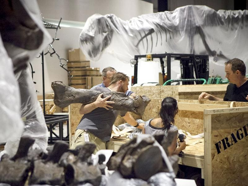 Paleontologists from the Black Hills Institute of Geologic Research with the help of film industry prop artists install a T-Rex fossil skeleton in the new Hall of Paleontology at the Houston Museum of Natural Science. AP/Michael Stravato