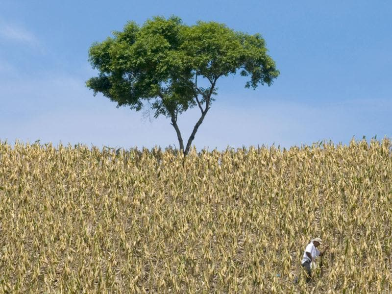 A farmer works at a corn field in Santa Ana, 46 km (28.6 miles) east of San Salvador. Reuters/Luis Galdamez, File