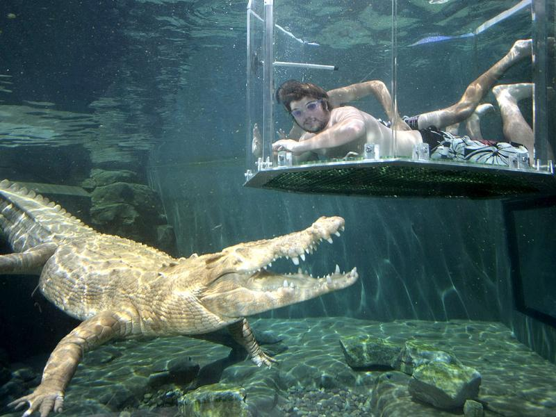 A tourist dives in a cage partially immersed in a crocodile pen in Crocosaurus Cove in Darwin. Swimming face-to-face with a massive saltwater crocodile might not be everyone's idea of fun but thrill-seekers are snapping up northern Australia's newest tourist attraction. REUTERS/Wade Huffman