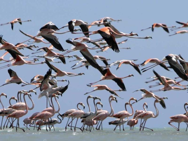 Flamingos fly over the waters of a reserve at a flamingo valley near the town of Manaure, Guajira province. Reuters photo/Joaquin Sarmiento