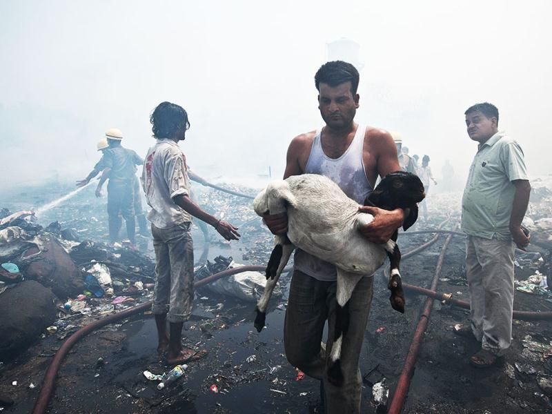 A slum resident rescues his goat from a fire in New Delhi. AFP Photo/Prakash Singh