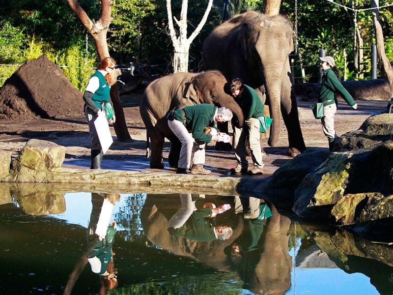 Elephant keeper Gary Miller takes the footprint of elephant Pak Boon at Taronga Zoo in Sydney. (Reuters Photo/Daniel Munoz)
