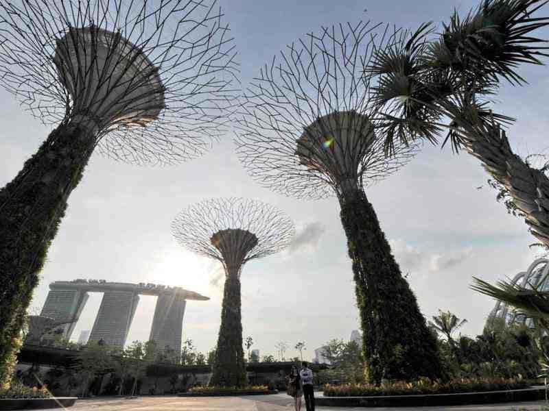A view of the towering supertrees and Marina Bay Sands hotels are seen at the Garden by the Bay in Singapore. These Supertrees range from 25-50 meters in height and serve as vertical gardens. AFP/Roslan Rahman