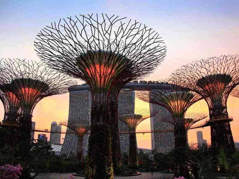Supertrees are lit against the sunset in Singapore. AP/Wong Maye-E