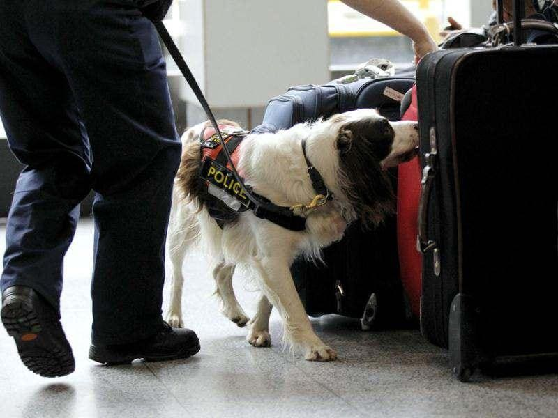 Chester, a Metropolitan Police explosives sniffer dog searches Victoria Coach Station in the run up to the London 2012 Olympic Games, London. Reuters/Sang Tan/pool
