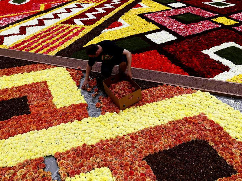 A gardener designs a giant carpet made of flowers to form a floral decoration at Brussels' Grand Place. Reuters photo/Francois Lenoir