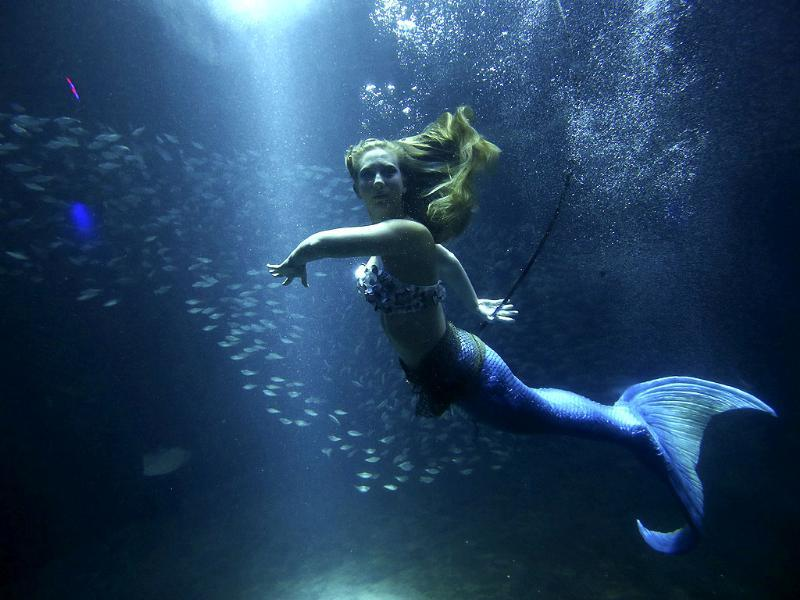 A woman dressed as a mermaid swims in a tank during 'Spirits of Tampa' event, which was held for participants of the Republican National Convention, at The Florida Aquarium in Tampa, Florida. Reuters/Eric Thayer