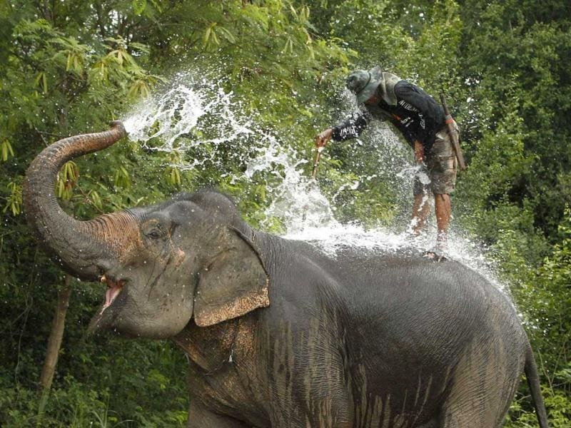 An elephant sprays water on itself before a match during the 11th King's Cup Elephant Polo Tournament in the resort town of Hua-Hin, some 160 km (99 miles) south of Bangkok. Reuters photo/Sukree Sukplang