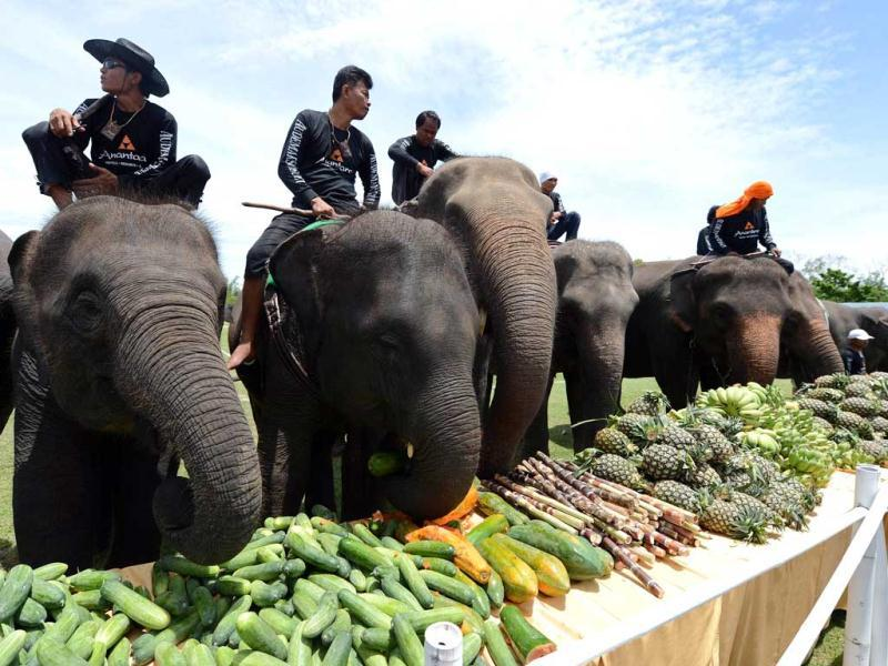 Elephants eat fruit during a fruits buffet as part of the annual King's Cup Elephant Polo Tournament in the southern Thai resort town of Hua Hin. AFP Photo/Pornchai Kittiwongsakul