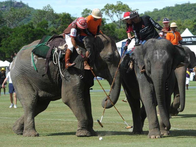 A polo player from the Elephant Story team (brown) fights for the ball with a member of the Nellies team (pink) during the annual King's Cup Elephant Polo Tournament in the southern Thai resort town of Hua Hin. AFP Photo/Pornchai Kittiwongsakul