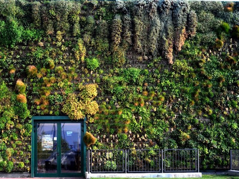 A general view shows the largest vertical garden on a shopping mall facade in the town of Rozzano, near Milan. The Fiordaliso commercial complex was awarded on September 17 the Guiness world record for its 1,262.85 square meter wall garden composed of over 44,000 plants and 200 flowers. (AFP Photo)