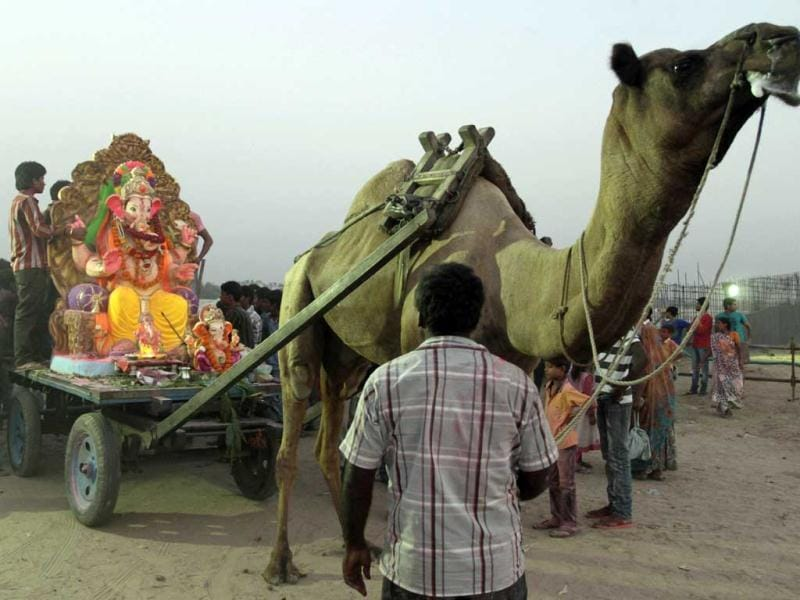 An idol of Lord Ganesha is loaded onto a camel cart for immersion during Ganesh Chaturthi festival in Ahmadabad. AP photo