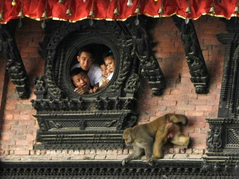 A monkey moves past devotees watching a chariot procession of Nepal's living goddess during the Indra Jatra festival in Katmandu, Nepal. During the week long festival, which marks the end of the monsoon season and celebrated by both Hindus and Buddhists, Nepal's living goddess is taken around the main parts of Katmandu in a wooden chariot pulled by supporters. AP/Binod Joshi