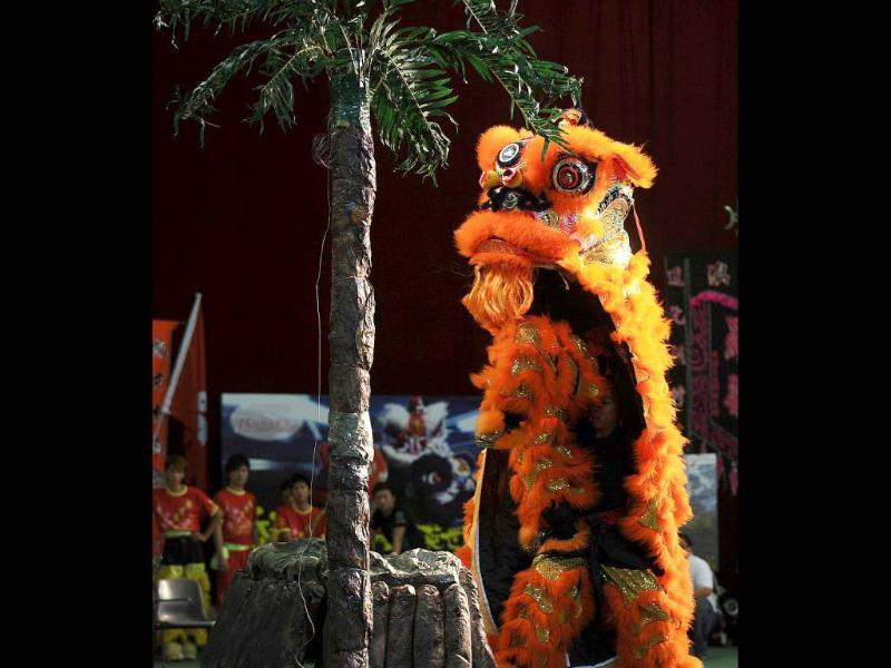 Indonesian team members perform a lion dance during the world championships in Hong Kong. A total of eight teams take part in the lion dance which is a form of traditional dance in Chinese culture, in which performers mimic a lion's movements in a lion costume. (AFP photo/Laurent Fievet)