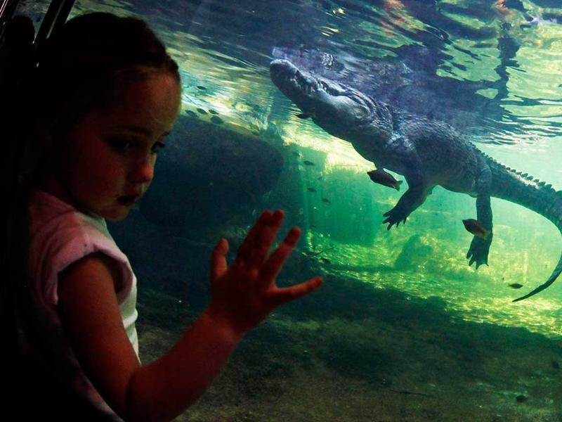 A girl looks at Rex, a crocodile, which weighs 700kg (1543.2 pounds), swimming across his tank at Wild Life Sydney Zoo. Reuters/Daniel Munoz