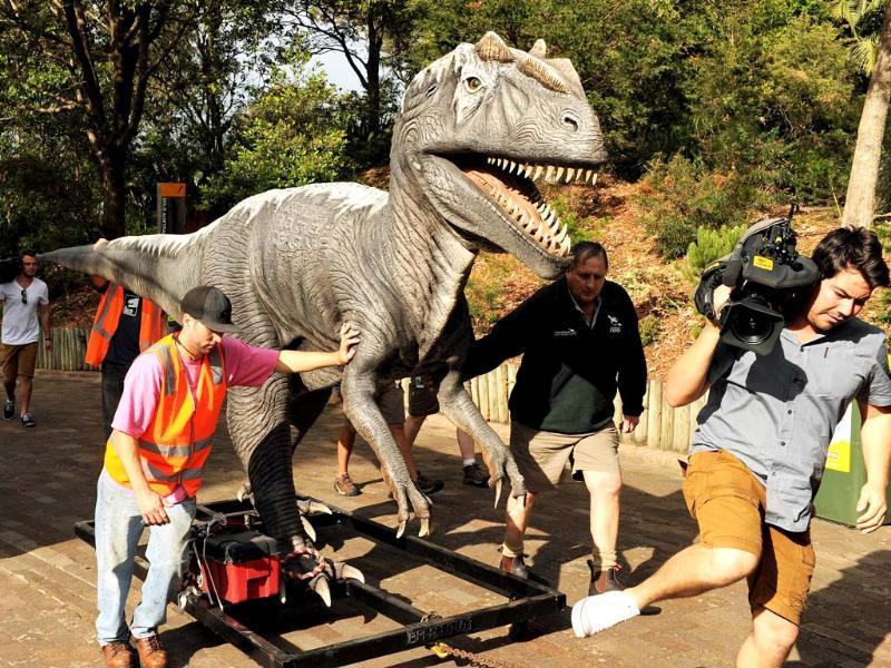 A television cameraman moves out of the way as an Allosaurus dinosaur is moved through Sydney's Taronga Zoo to take up it's position for the