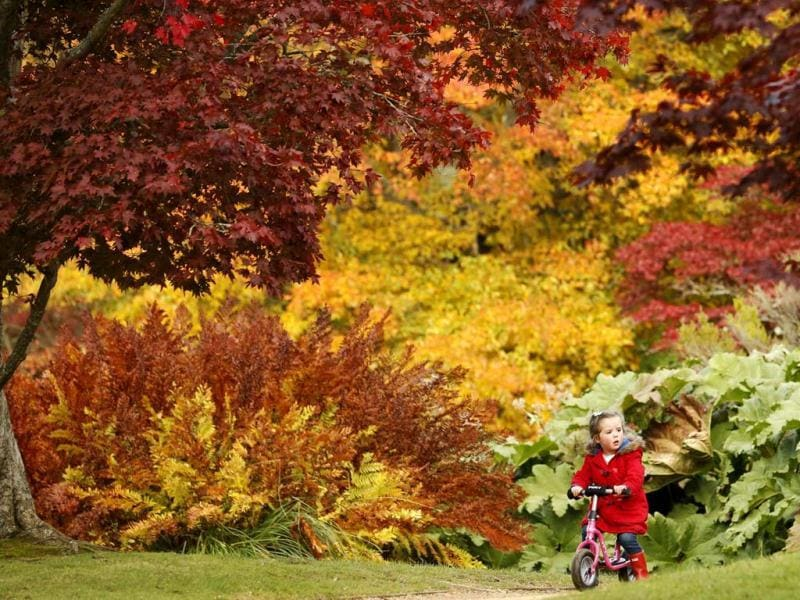 Three year-old Annie Wood rides her scooter in front of changing autumn leaves in Sheffield Park Gardens near Haywards Heath in southern England. Reuters Photo