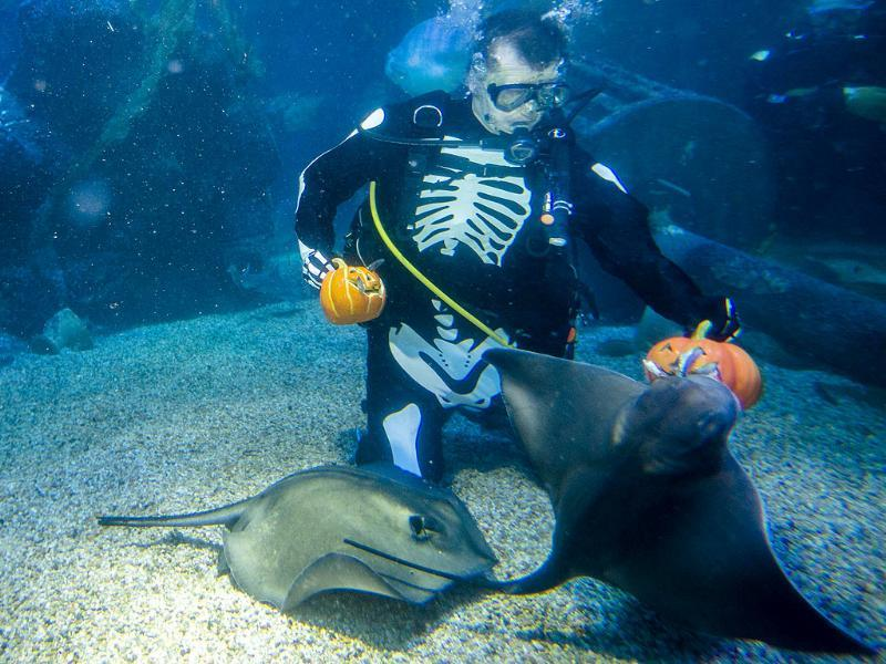 A diver in a skeleton costume feeds fish during a media opportunity to mark Halloween at the Sea Life aquarium in Berlin. (AP Photo/Markus Schreiber)