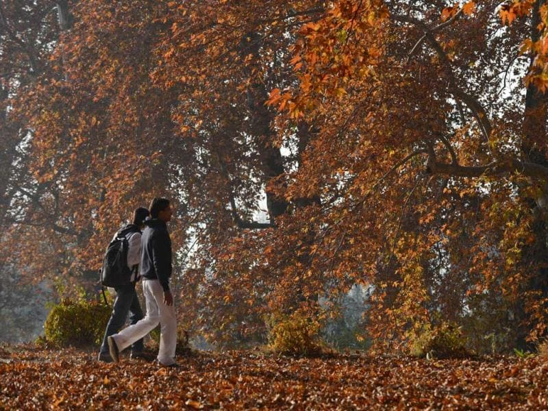 Tourists walk near maple trees during autumn in Srinagar. Trees are changing colours while the days become shorter as winter approaches in J&K. AFP Photo