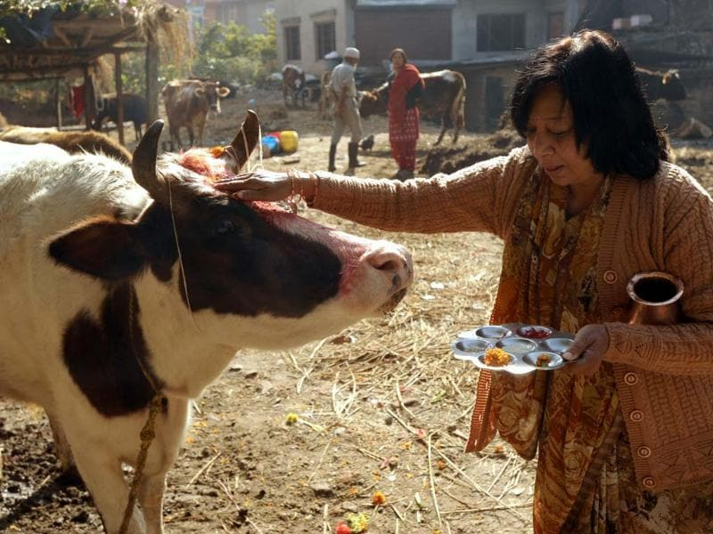 A Nepalese Hindu woman worships and offers fruit to a cow, regarded as an incarnation of the Hindu Goddess of prosperity Laxmi, during the Tihar (Diwali) festival in Kathmandu. AFP PHOTO