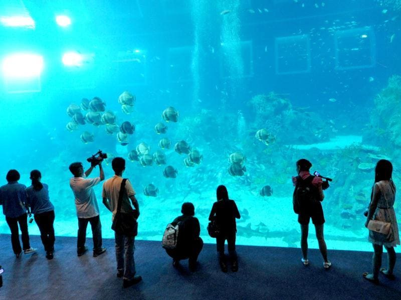 Guests watch the open ocean habitat, seen through the world's largest viewing panel, at 36 metres wide by 8.3 metres tall of the South East Asia aquarium, the world's largest oceanarium at Sentosa Resort World marine life park. (AFP Photo)