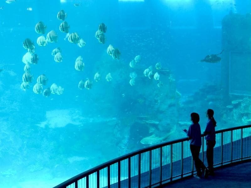 Two employee stand next to the open ocean habitat, seen through the world's largest viewing panel, at 36 metres wide by 8.3 metres tall of the South East Asia aquarium, the world's largest oceanarium at Sentosa Resort World marine life park. (AFP Photo)