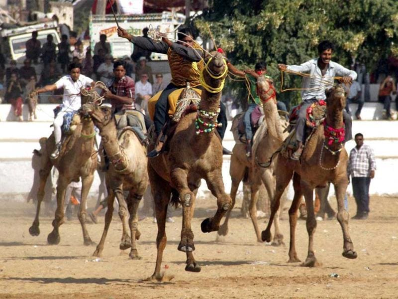 Participants at a camel race completion during inaugural function of the annual Pushkar Fair in Pushkar. PTI