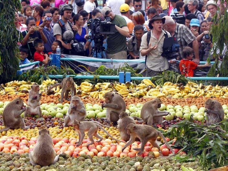 Monkeys eat fruits during the Monkey Buffet Festival, in front of the Pra Prang Sam Yot temple in Lopburi province, 150 km (94 miles) north of Bangkok. Reuters Photo