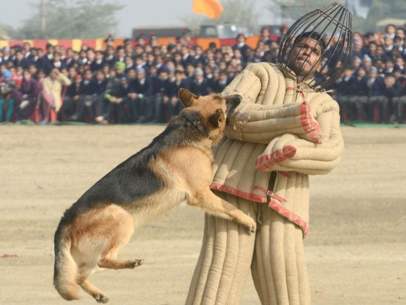 An Indian Army K9 unit performs a demonstration drill during an Army Mela (fair) and exhibition at Khasa, some 15 kms from Amritsar. The Army Mela (fair ), organised by the Vajra Corps, displayed weapons, tanks, aircraft and military equipment to students and civilian visitors of the event. AFP PHOTO/ NARINDER NANU
